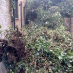 garden-waste-removal-london